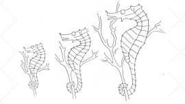 Vintage Workbasket Embroidery Pattern - Sea Horses