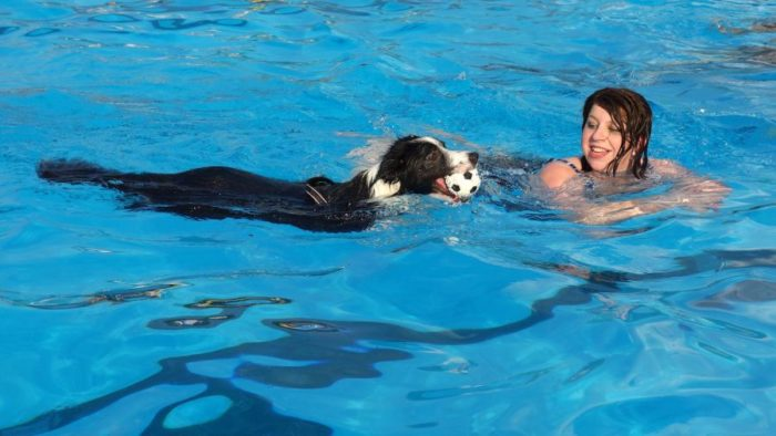 Can you drink swimming pool water in an emergency - Can you swim after putting algaecide in pool ...
