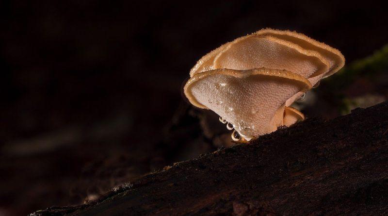 3 hongos para aumentar tu inmunidad
