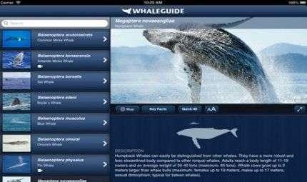 Una app per balene e delfini