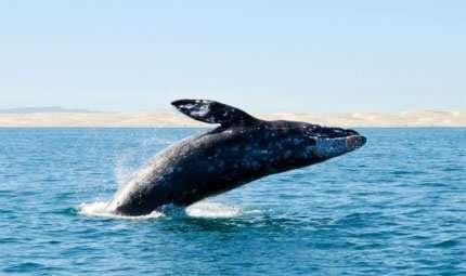 Nel Mediterraneo sulla rotta delle balenottere