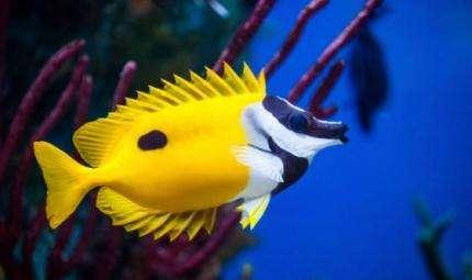 Behaviour, animali marini in mostra a Fucecchio