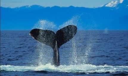 Salvare i mammiferi marini: una sfida da vincere