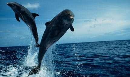TWIP, il sonar dei delfini
