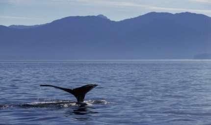 Dove passano l'inverno le balene
