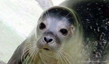 """A Marettimo avvistata """"famiglia""""di foche monache"""
