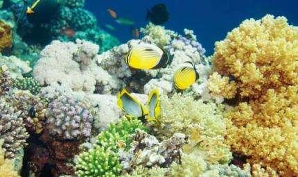 La fotografia naturalistica subacquea