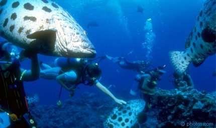 Il giro del mondo sotto il mare