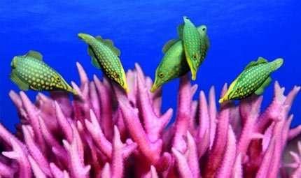 Al Museo Alinari le foto subacquee di Akiyoshi Ito