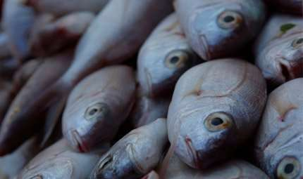 Cina al top per il consumo di pesce