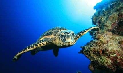 Workshop di fotografia subacquea a l'Aquila
