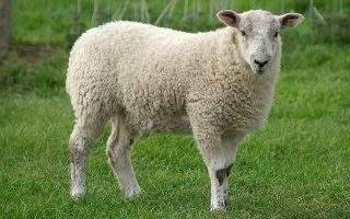 Counting Sheep: Maintaining Brand Equity with Multi-Category Brands