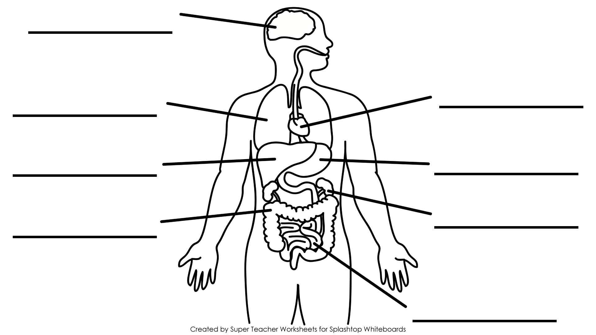 Blank Human Body Organs Diagram Sketch Coloring Page
