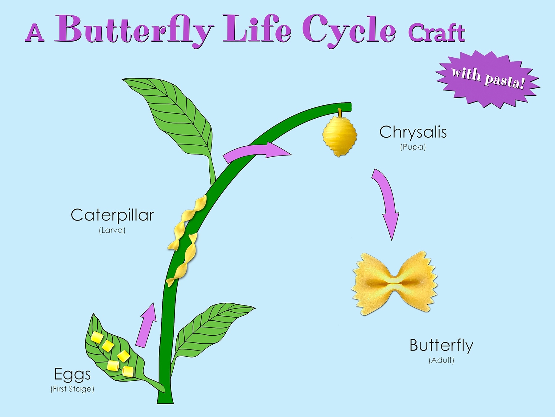 Learn About The Life Cycle Of A Butterfly
