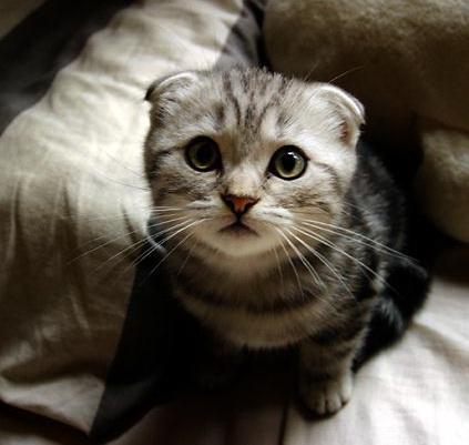 貓咪論壇 - 眼睛白內障手術~~請推薦不錯的獸醫院(南部)