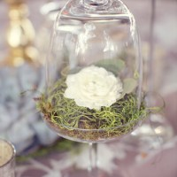 Simple Centerpiece: Single Rose Bloom on Moss in Vintage Glassware