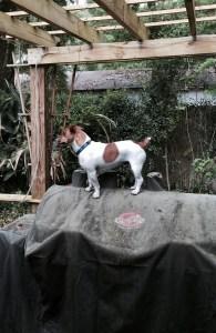 Tucker, lizard chaser