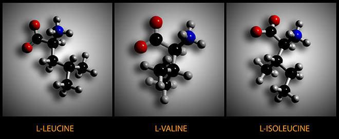 bcaas leucine valine isoluecine