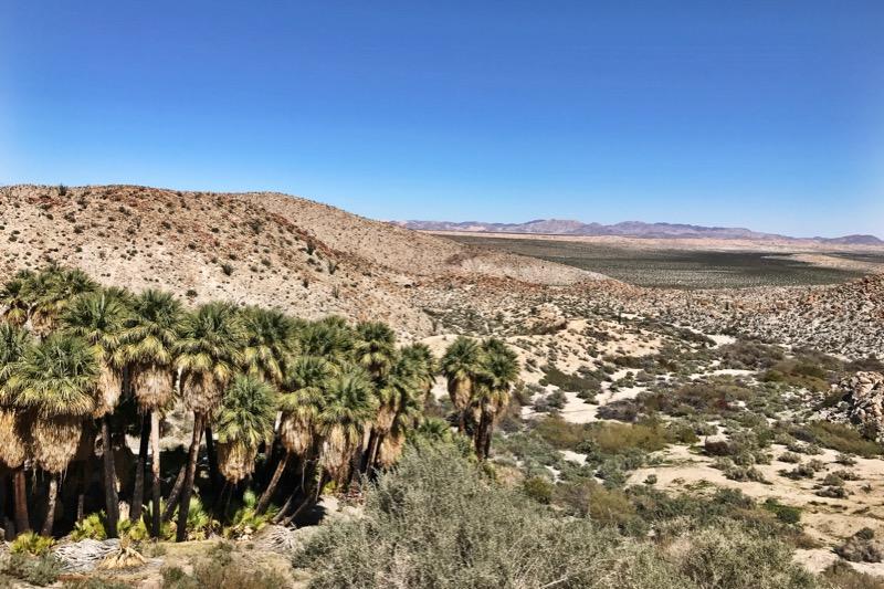 Mountain Palms Oasis