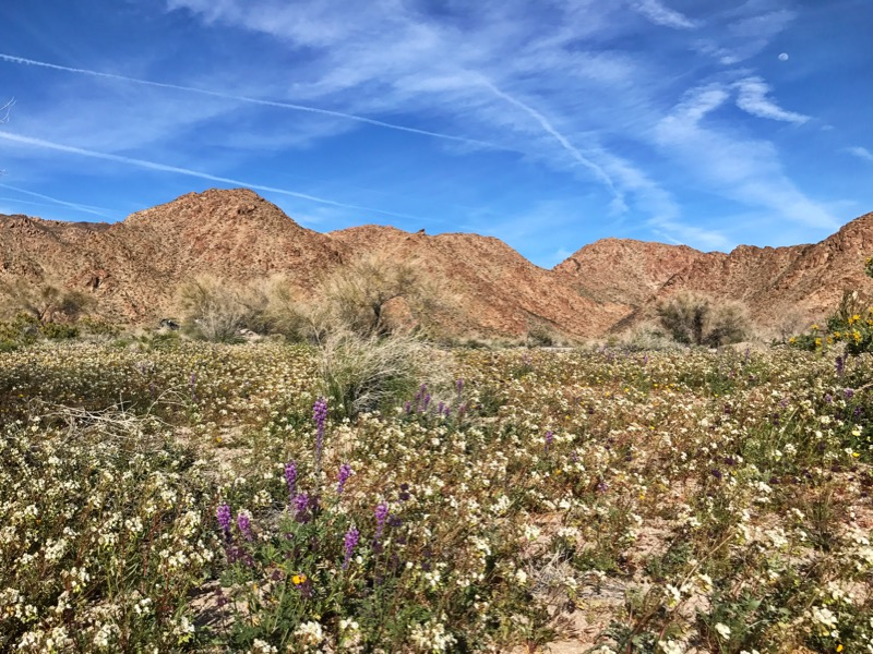 Wildflowers In Bloom At JTNP