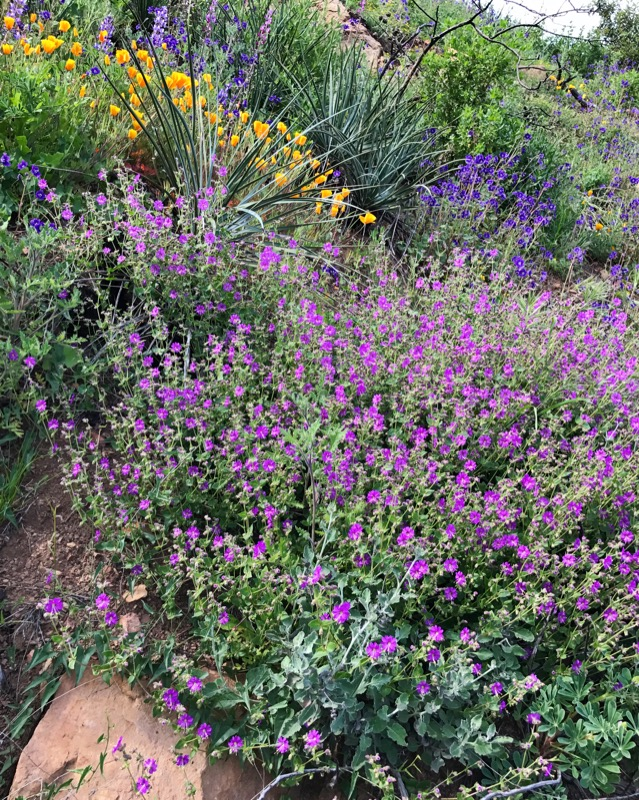 Wildflowers In Pt. Mugu SP