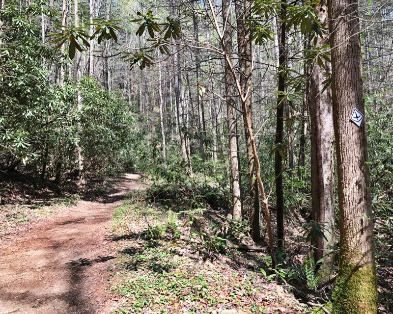 Days 28 & 29: Chattahoochee-Oconee National Forest – Conasauga Ranger District