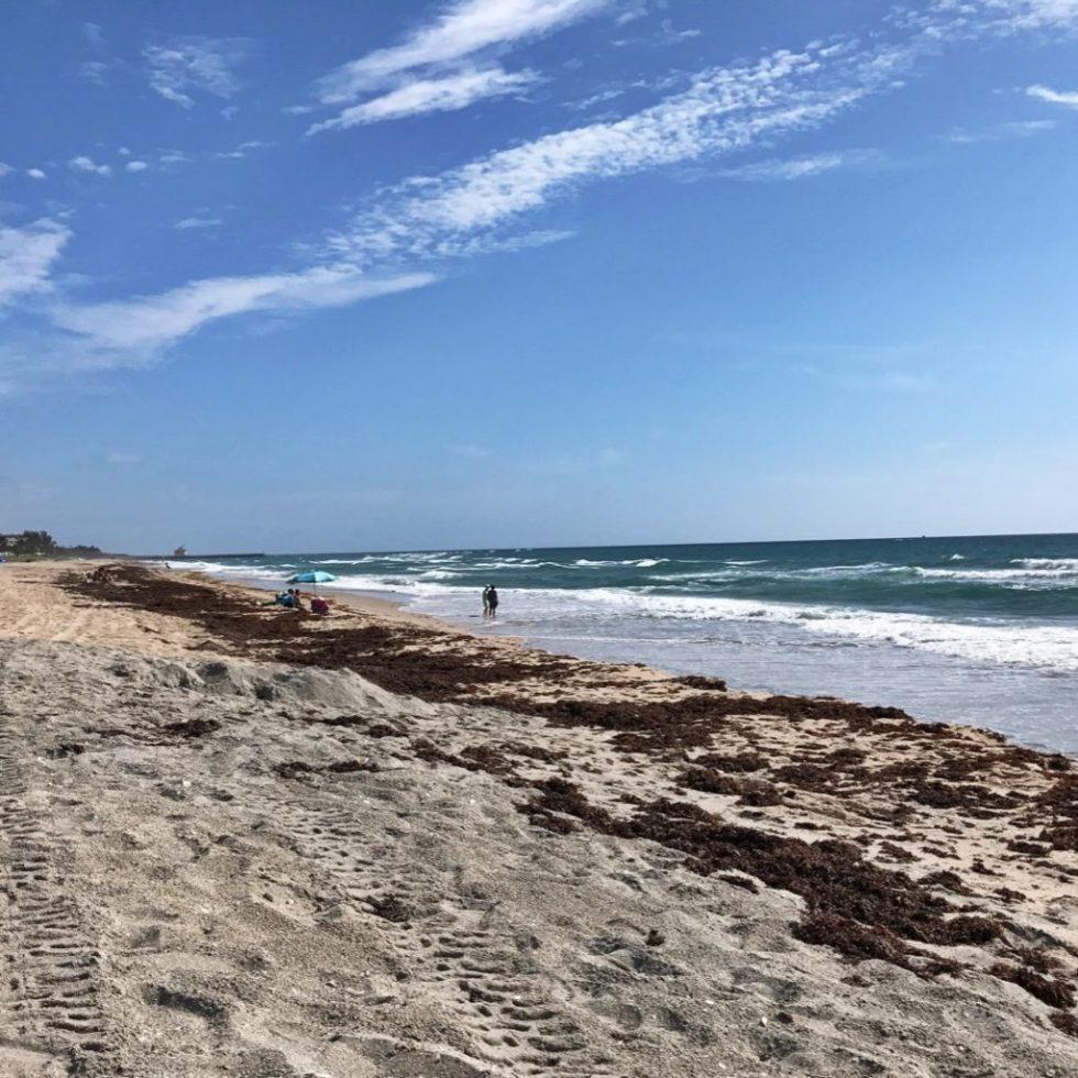 View North From Ocean Ridge Hammock Park Beach