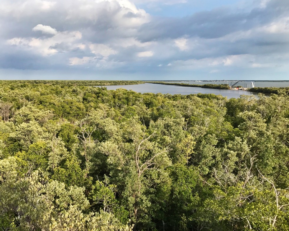 View From The Observation Tower In Everglades City