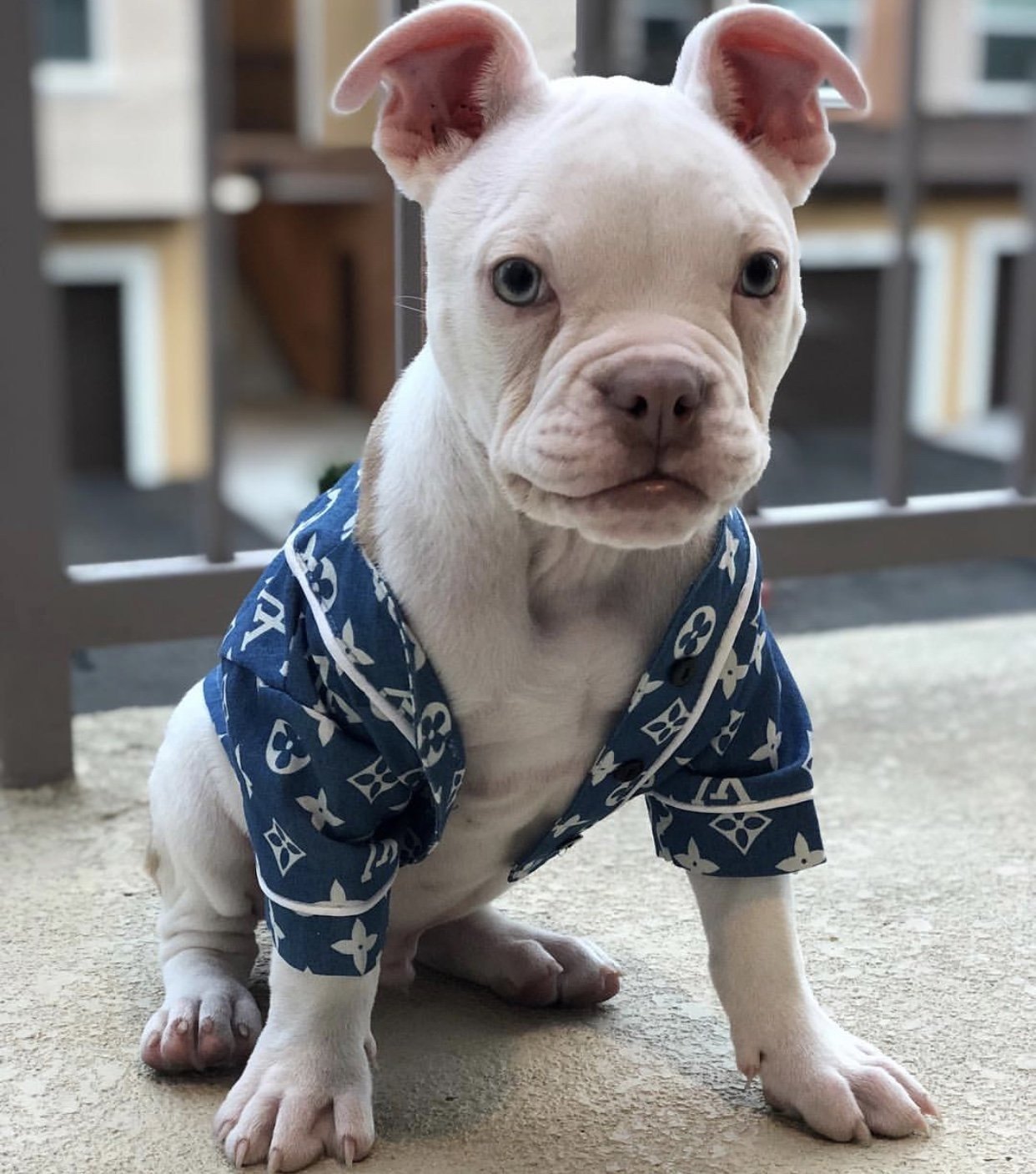 Chewy V Baseball Dog Shirt