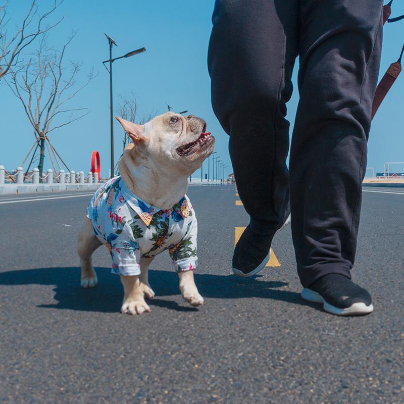 St. Lucia Dog Shirt