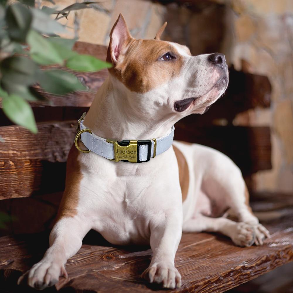 Copenhagen Custom Engraved Dog Collar