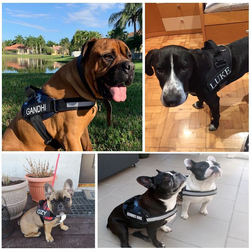 Custom ID No Pull Dog Harness Label