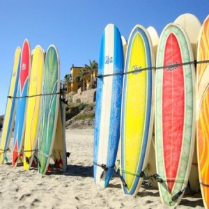surf board rental