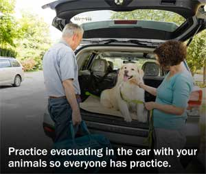 Practice with pets