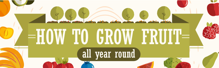 How-To-Grow-Fruit-All-Year-Header