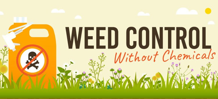 Controlling Weed Growth
