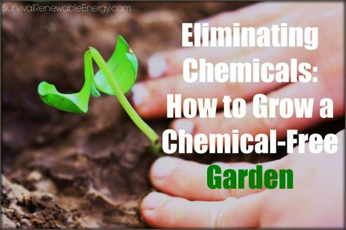 Eliminating Chemicals: How to Grow a Chemical-Free Garden