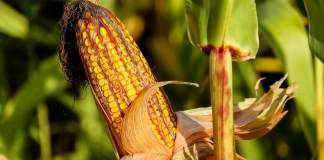 Barriers to the Development of Next Generation Biofuels