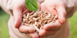 Mass Effect: What Is Biomass Energy and How Can It Be Used?