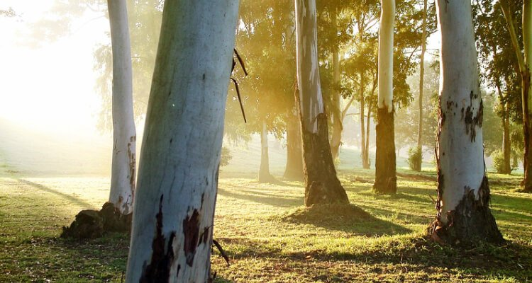 Discover how to use trees for survival
