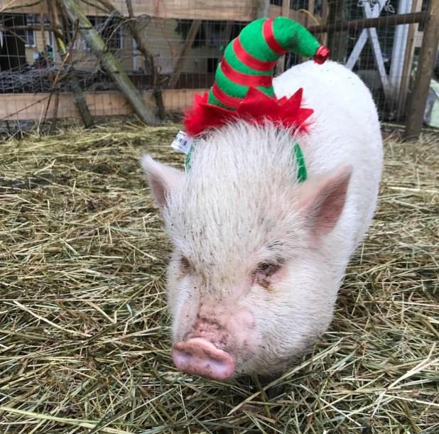 Moo's Christmas