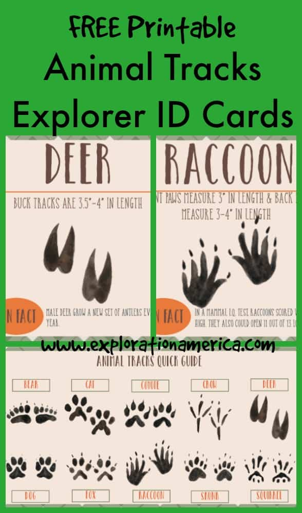 Printable Animal Tracks Guide