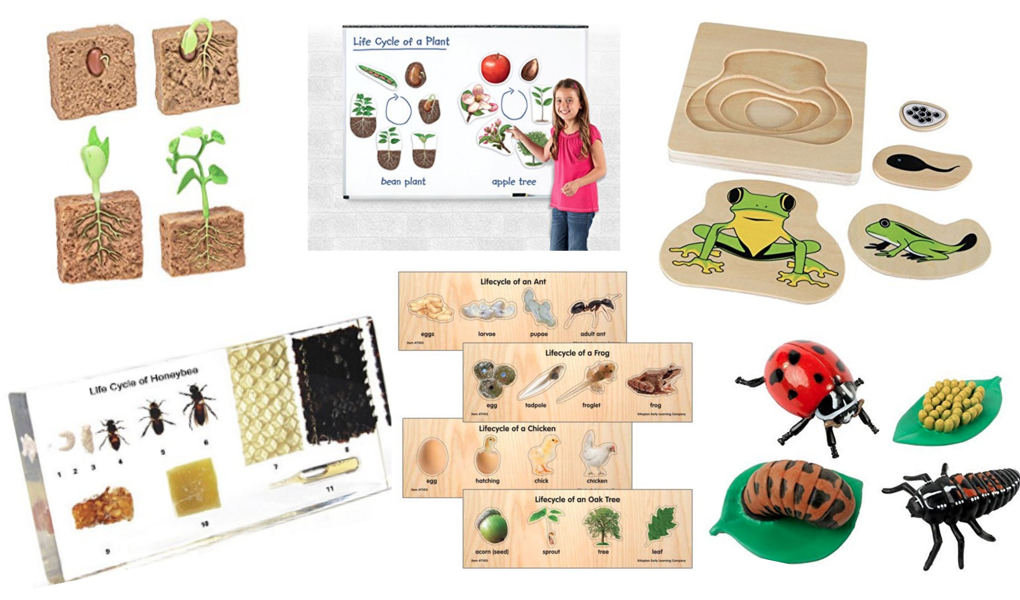 Life Cycle Products To Buy For Educational Learning Roundup
