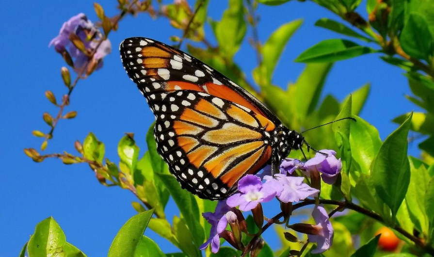 A butterfly can symbolize a new start in life. A new hope in healing from trauma and flashbacks.