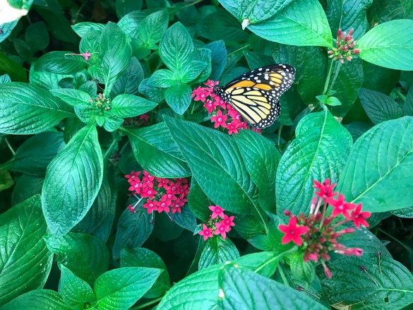 butterfly_4_butterfly-atrium-excursion