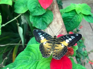 spending-the-day-with-butterflies-300x225 A self-care day with the butterflies.