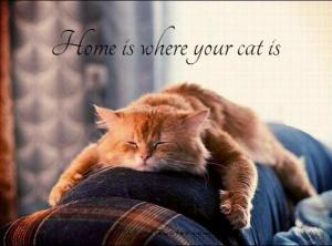 home-is-where-your-cat-is-quote-1-300x222 Survivors and our pets, an unbreakable bond.