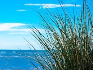 sea-946337_960_720-300x225 Hearing the Grass Grow