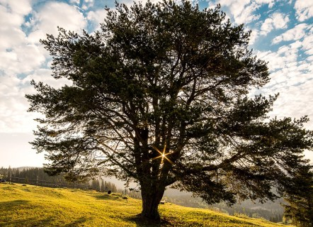 the safe place of refuge, the strong safe tree - surviving my past