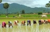 कृषि क्षेत्रमा एक अर्ब ८३ करोडभन्दा बढी क्षतिकृषि क्षेत्रमा एक अर्ब ८३ करोडभन्दा बढी क्षति